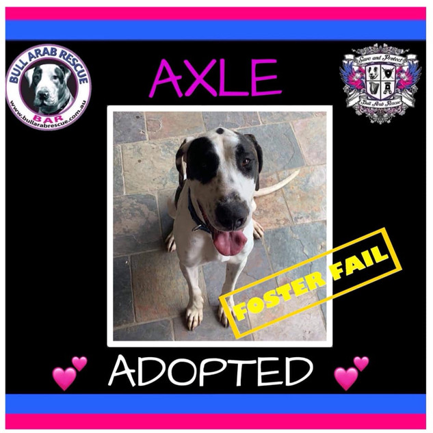 axle adopted.jpg