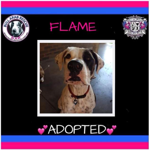 flame adopted.jpg