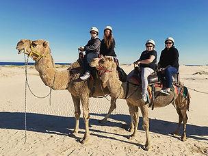 Camel Rides Shoal Bay.jpg