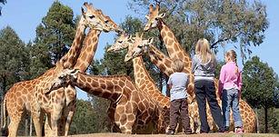 Dubbo Zoo 3.jpg