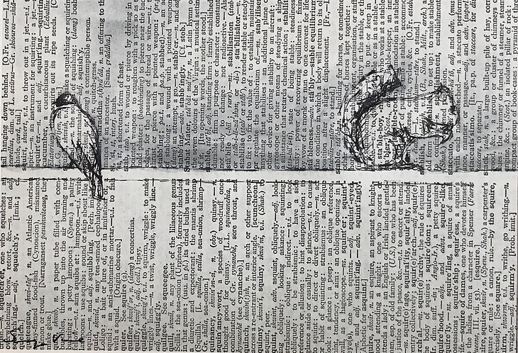 Bird and Squirrel (dictionary)