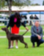 Best & Opposite Baby Puppy In Show.jpg