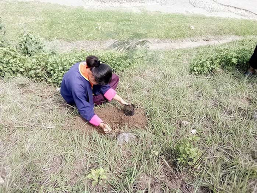 Eco(di)versity: Education, Community Building and Sustainable Development in Bhutan