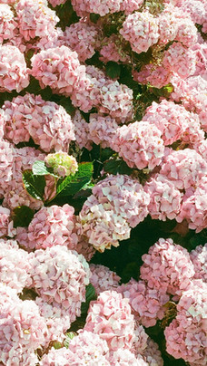 Cote de granite rose