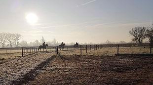 three horses s_edited.jpg