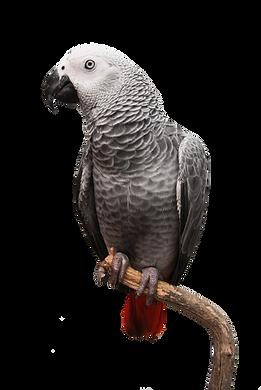 Bird Hut, Parrots, toys, and supplies - Portland-Vancouver