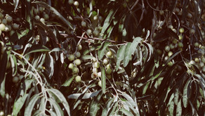 FEBRUARY 8, 2020 - THE OLIVE OIL