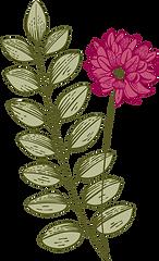 dibujo Botánica