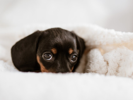 Helping Your Pet Fight The Winter Blues