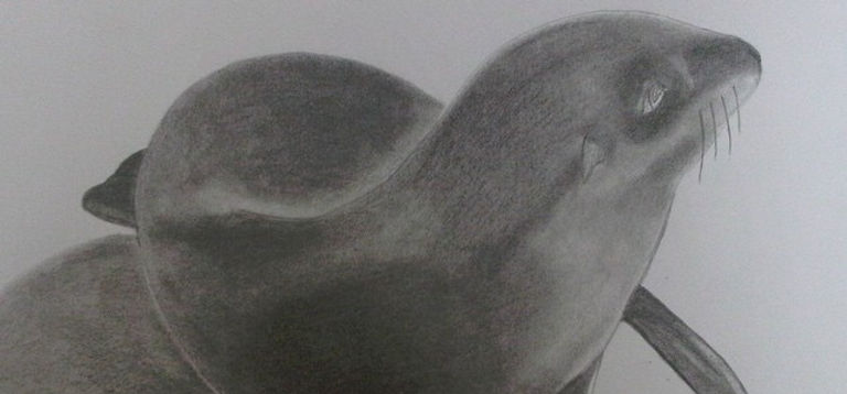 Seal pup graphite #paper #art #artists #artforsale #art4sale #instaart #seal #seals #fur #pup #juzzz