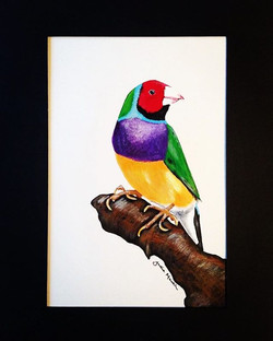 One of my entries to thisbyears _artability_adec _artability_australia #drawingoftheday #artoftheday