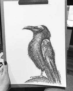 Jason's crow