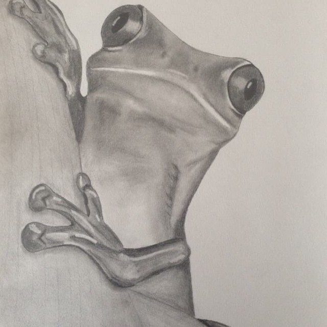 'Frederick' SOLD Graphite #greentreefrog #frog #frogs #cute #paper #pencil #art #artists #artforsale