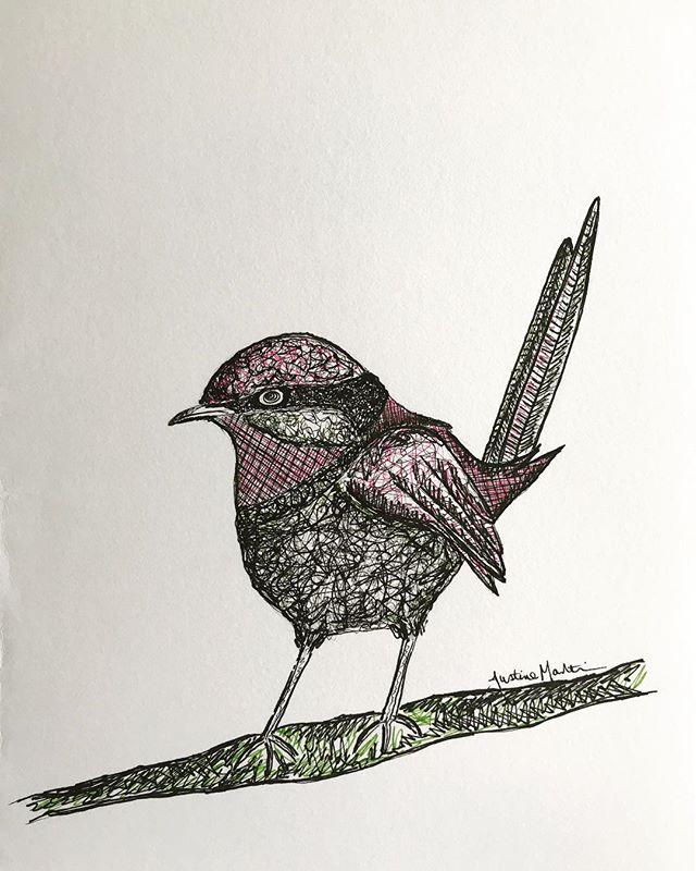 pink wren