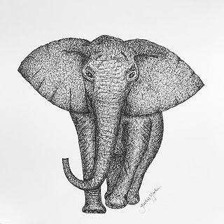 drawing of an elephant ink hand drawn