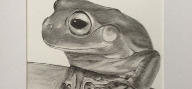 'Hollamby' graphite #frog #frogs #pets #paper #pencil #passion #beautiful #graphite #greentreefrog #