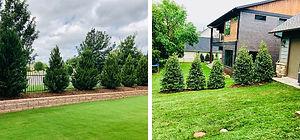 Landscape Trees Design Project 2.jpg