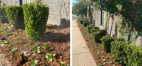Evergreen Commercial Project – Landscape design