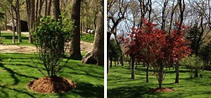 Landscape Trees Design Project 1.jpg