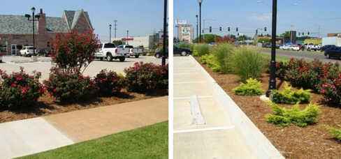Evergreen Commercial Project – Landscape design