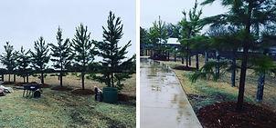 Landscape Trees Design Project 3.jpg
