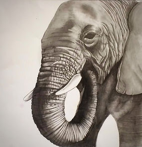 Pencil drawing of an aisan elephant