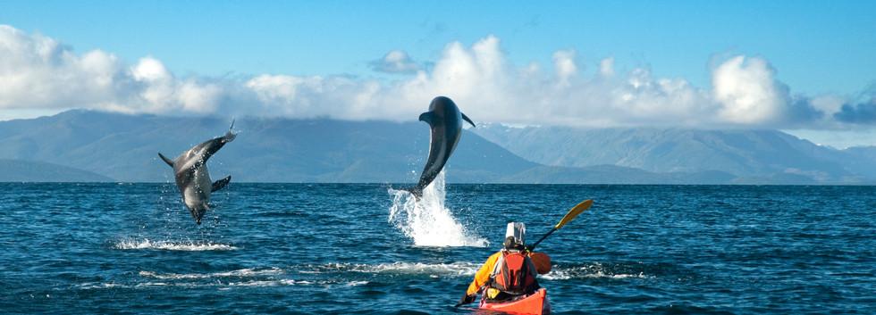 kayak y delfines.jpg