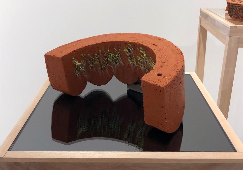 Scalloped Tree Ring, 2021