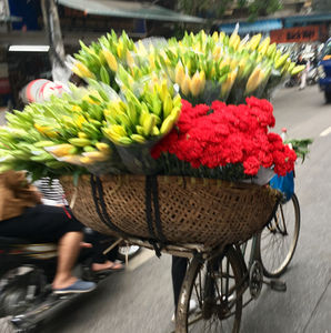 Hanoi, Halong and the highest mountain in Vietnam!