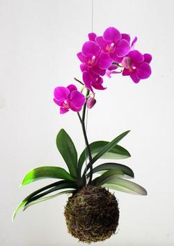 kokedama mini orquídea