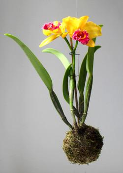 kokedama orquídea