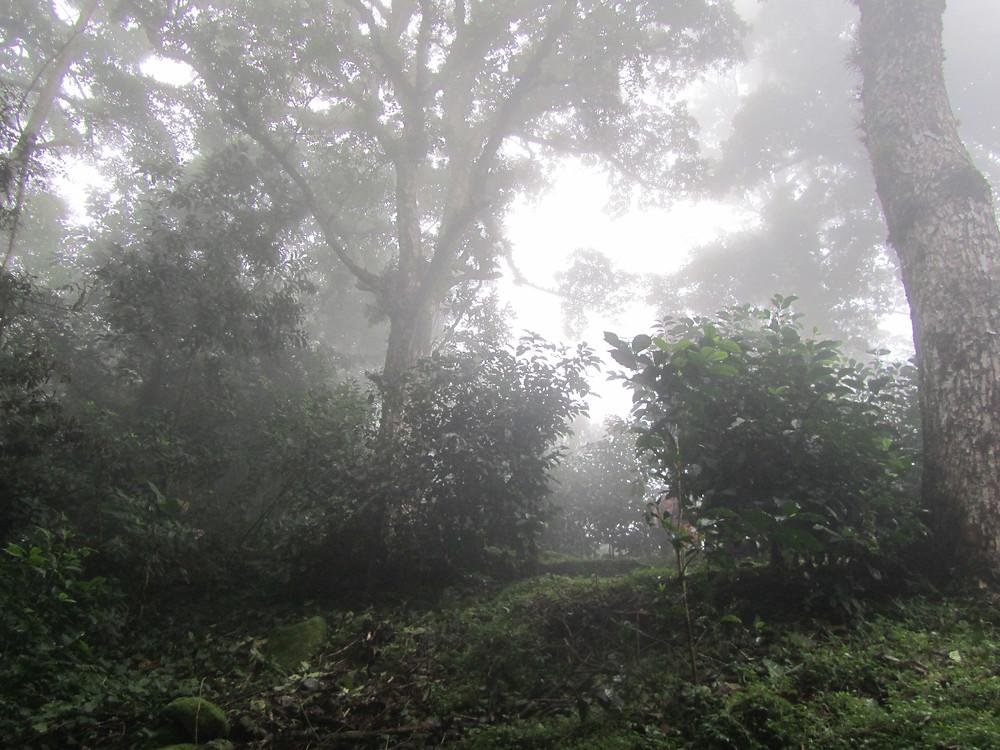 Forrest like terrain of Geisha Farm