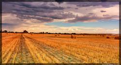 Harvest_SergeyGreyCom.jpg