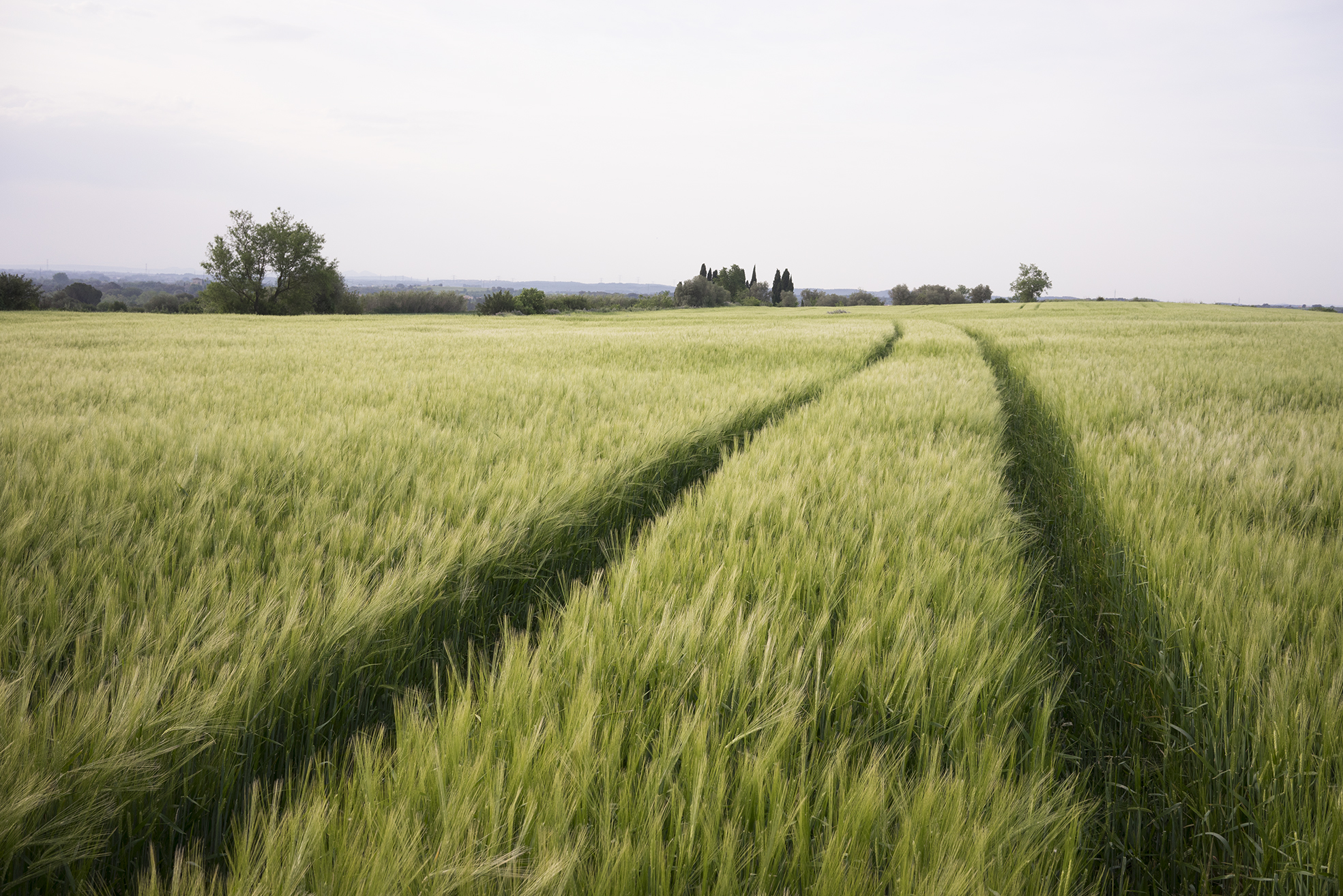 Campos de trigo que rodean el pueblo