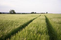 Los campos de maíz rodean el pueblo