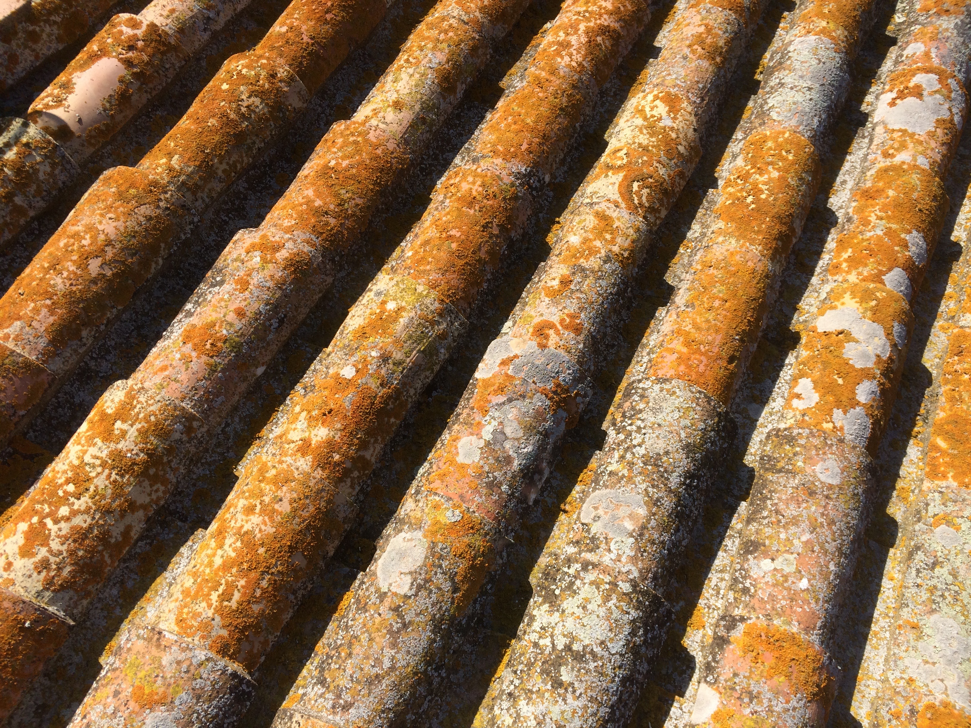 Los tejados desde nuestra terraza