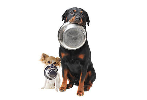 dog-food-bowl-.jpg