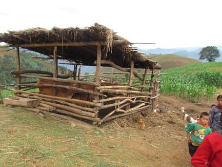Yunnan_062011_00162.jpg