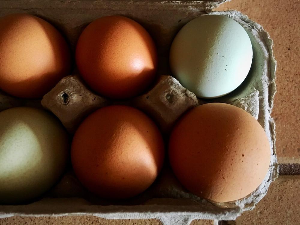 pasture, free range, local eggs