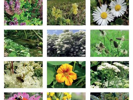 Der Heilpflanzenkalender 2021 ist da!