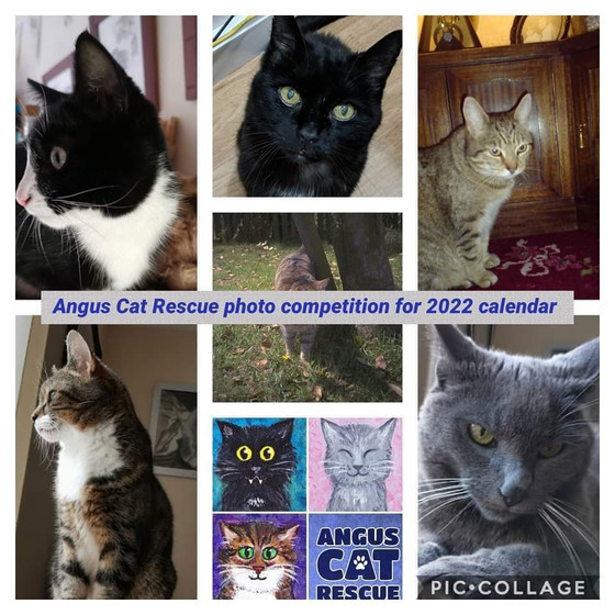 Calendar 2021 for Angus Cat Rescue Cat photo competition