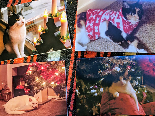 Christmas Cards pack of 12