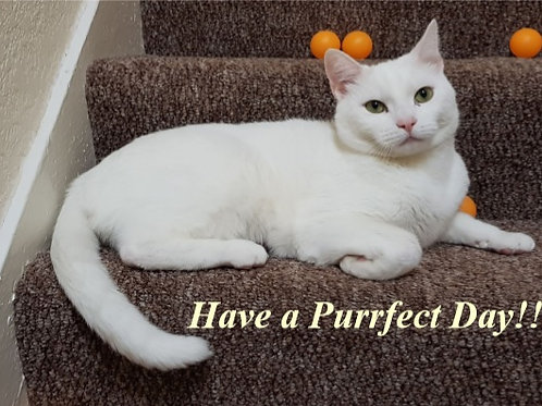 Have a Purrfect Day!