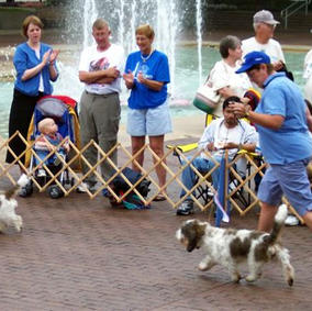 A.K.C Pure Breed Dog Showcase