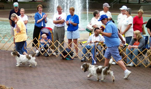 A.K.C. Pure Breed Dog Showcase
