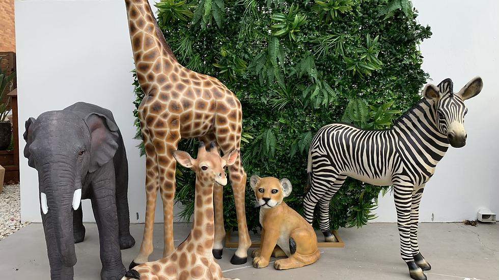 Safari Pack