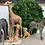 Thumbnail: Safari Pack
