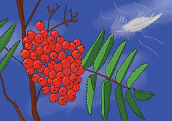 Wild Berries.jpg