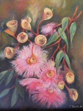 Flowering Corymbia