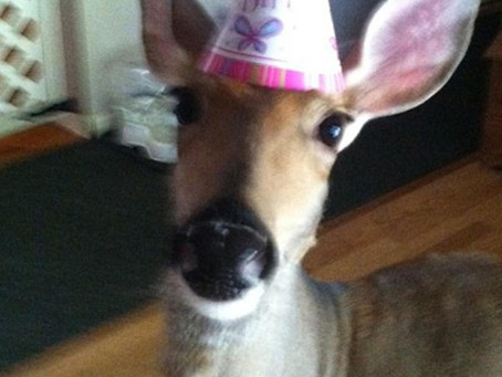 Lilly the Deer Stays in Genesee County